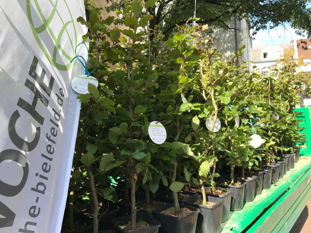 Unser Baumangebot zur Pflanzaktion Baum