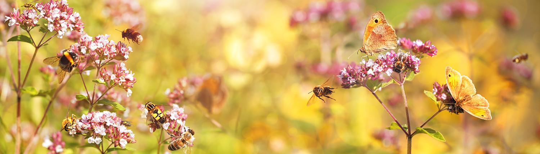 Die KlimaWoche Bielefeld setzt sich für die Rettung der Insekten ein