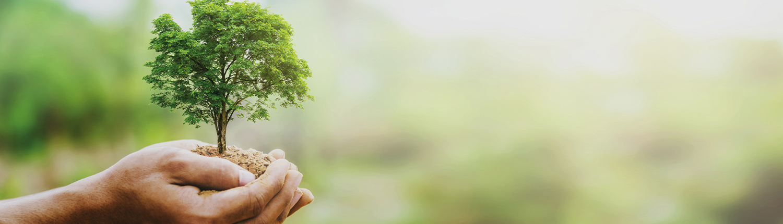 Pflanzaktion Baum, Baumpflanz-Aktion