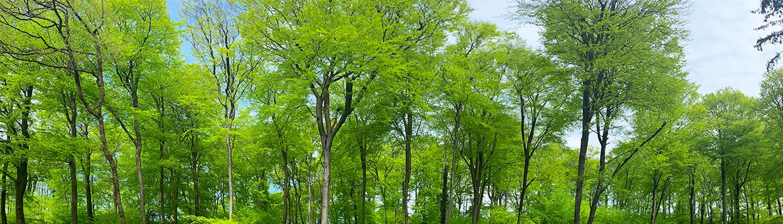 Schöne Bäume in der Senne